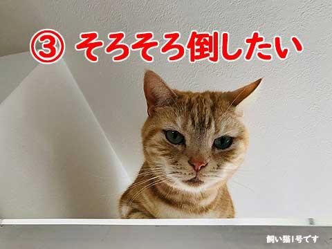 IMG_6283
