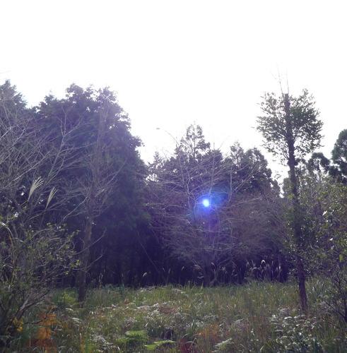 奥宮前草地