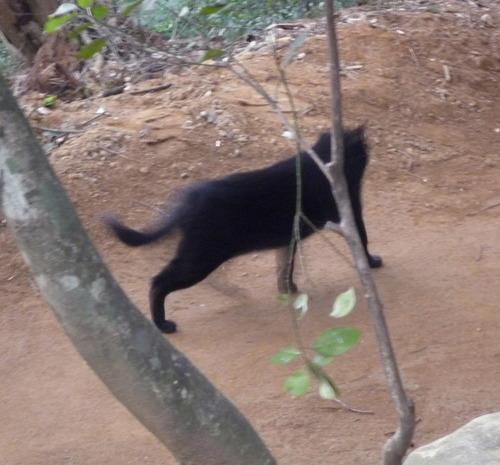 猿田神社 黒猫