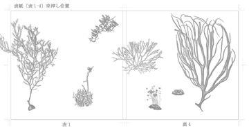 海藻 海の森のふしぎ - 02