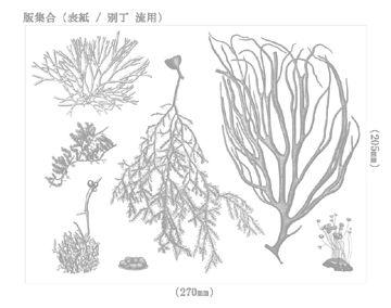 海藻 海の森のふしぎ - 01