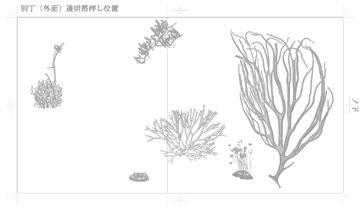 海藻 海の森のふしぎ - 03