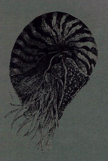 「オウムガイ」ななめリングノート