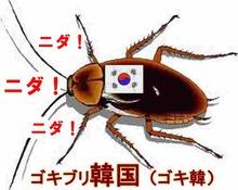 ゴキブリ韓国(ゴキチョン)