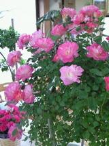 お祝いの花 4