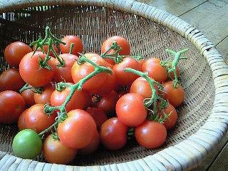房付きトマト