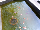 魚2008