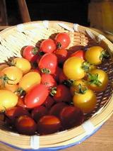 トマト5種