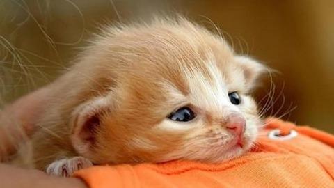 cat16_convert_20180907222414