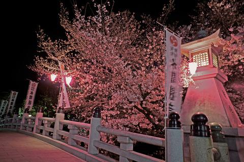 夜桜(水間観音)