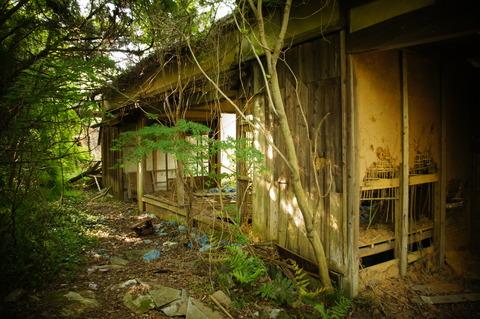 高田牧場006