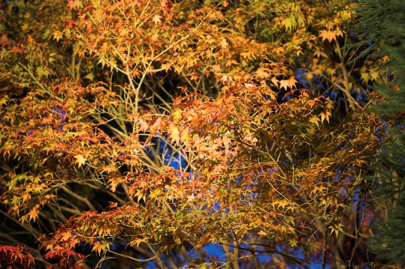 京都大原寂光院11_s.jpg