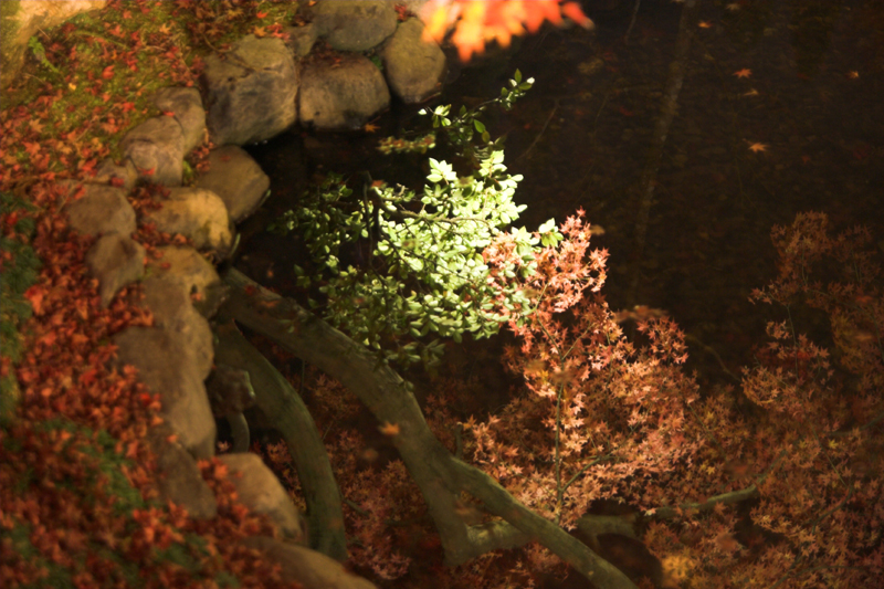 けいはんな記念公園_紅葉ライトアップ19_s.jpg