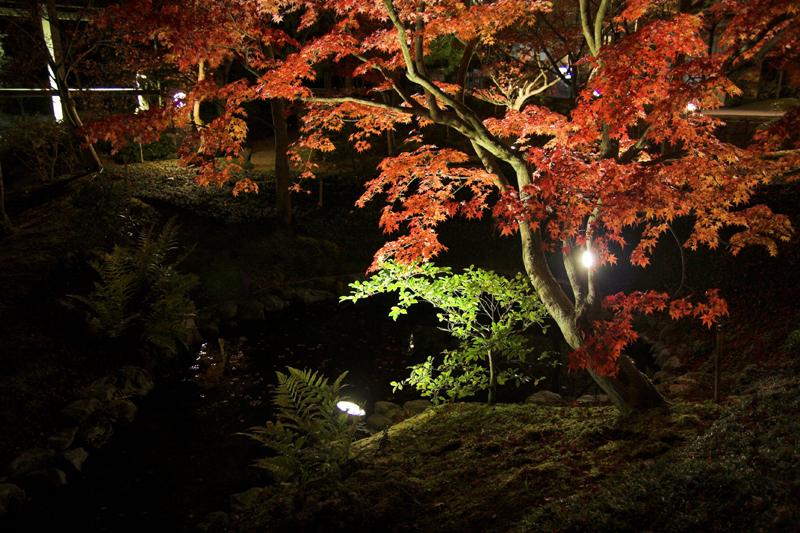 けいはんな記念公園_紅葉ライトアップ12_s.jpg