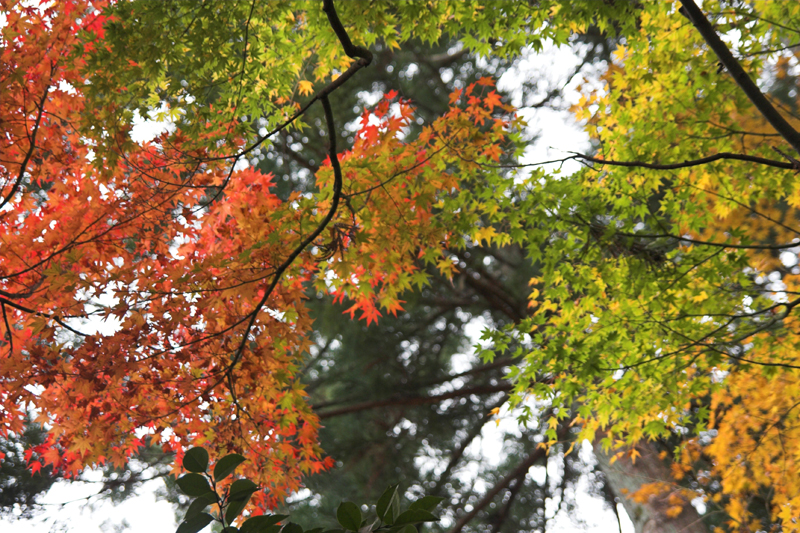 京都大原三千院11_s.jpg