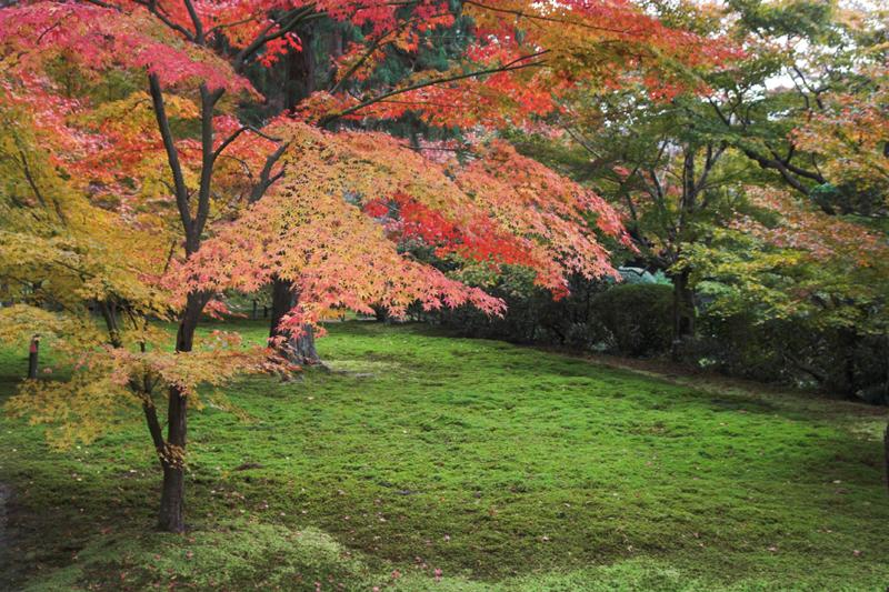 京都大原三千院2_s.jpg