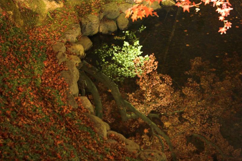 けいはんな記念公園_紅葉ライトアップ18_s.jpg