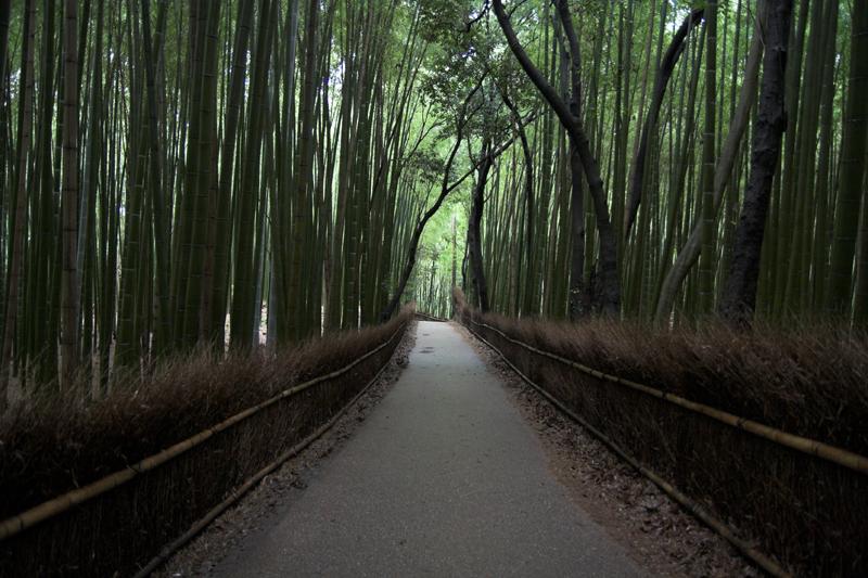 竹林など・・嵯峨嵐山で6_s.jpg