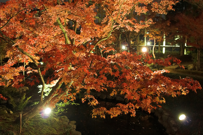 けいはんな記念公園_紅葉ライトアップ14_s.jpg