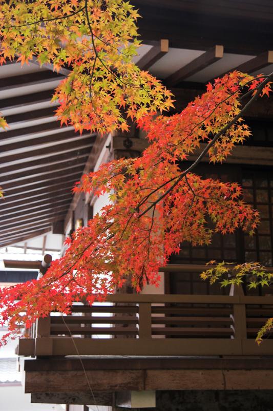 京都大原三千院9_s.jpg