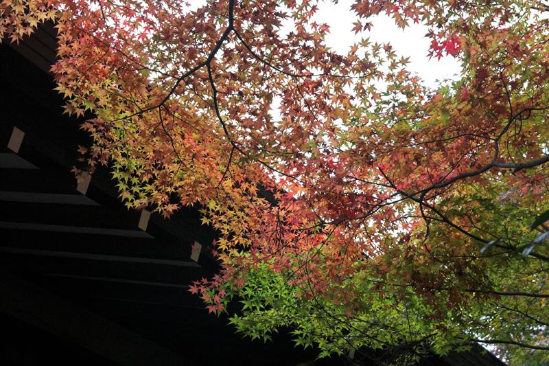 京都大原三千院10_s.jpg