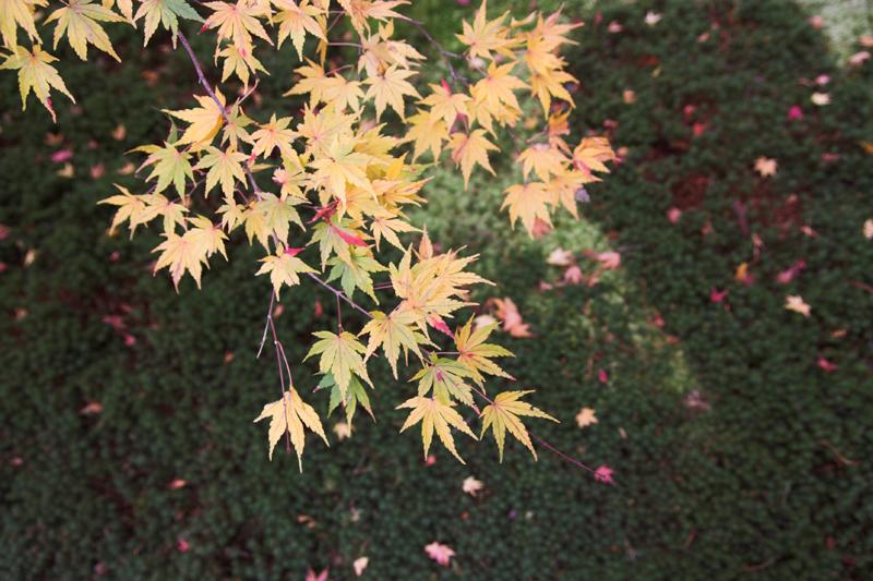 京都大原三千院3_s.jpg