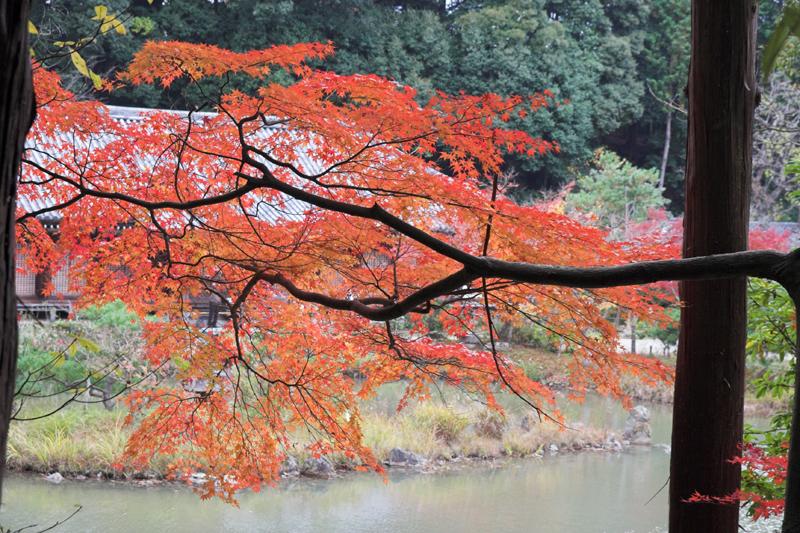 浄瑠璃寺10_s.jpg