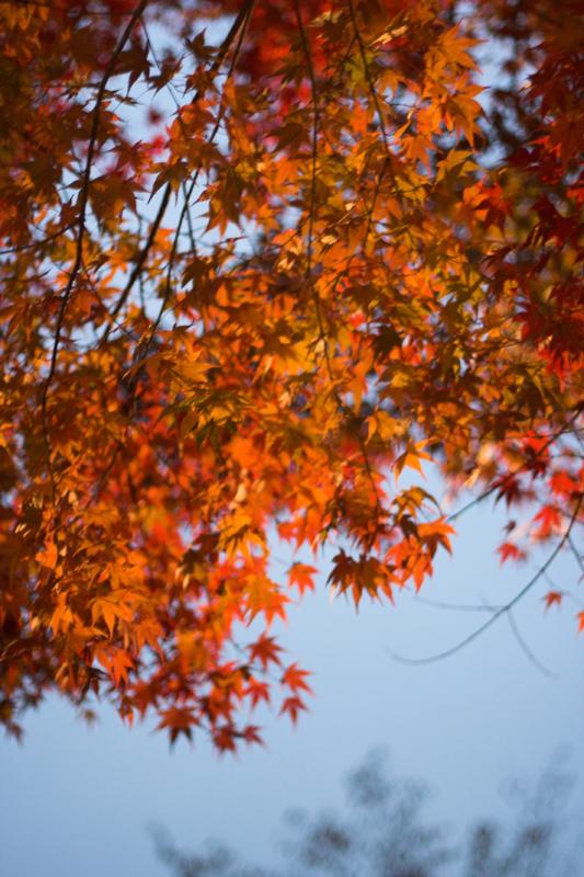 京都大原寂光院13_s.jpg