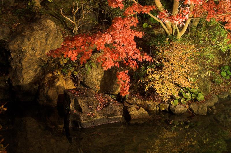 けいはんな記念公園_紅葉ライトアップ9_s.jpg
