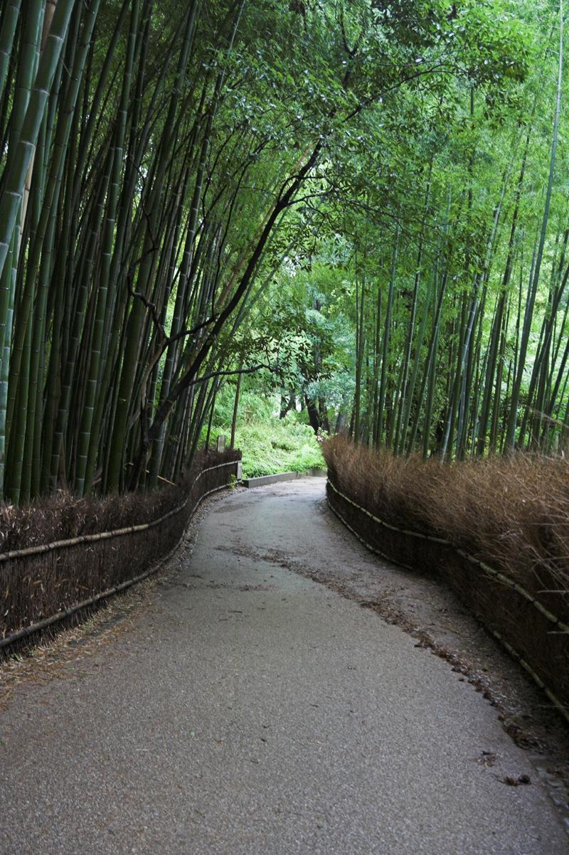 竹林など・・嵯峨嵐山で1_s.jpg