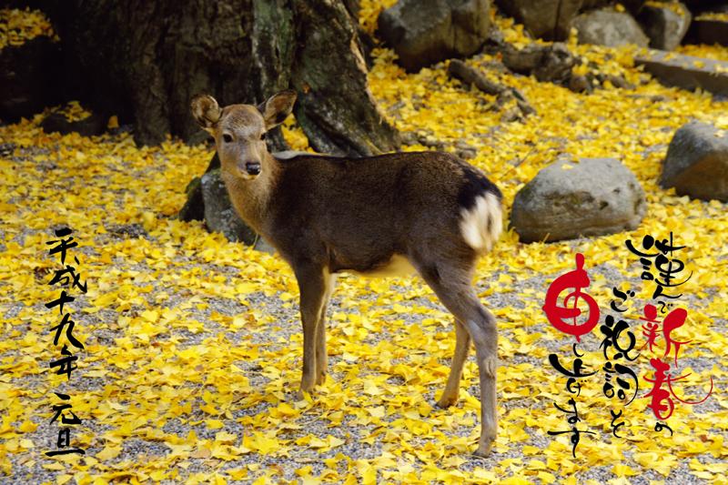 2007_1新春挨拶_s.jpg