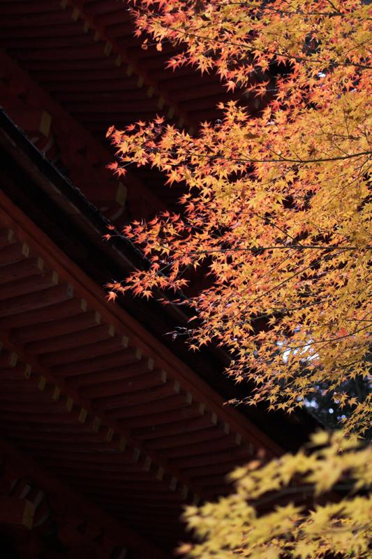 浄瑠璃寺6_s.jpg