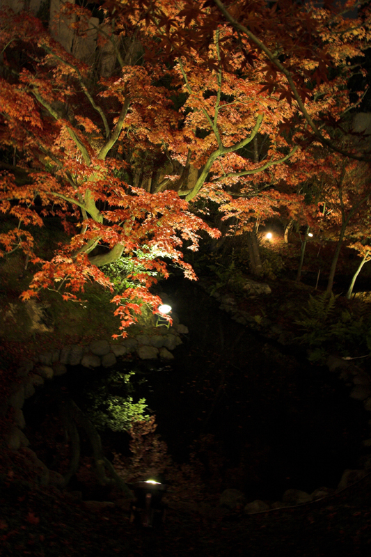 けいはんな記念公園_紅葉ライトアップ17_s.jpg