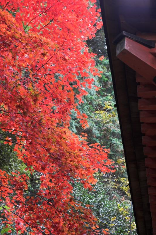 浄瑠璃寺7_s.jpg