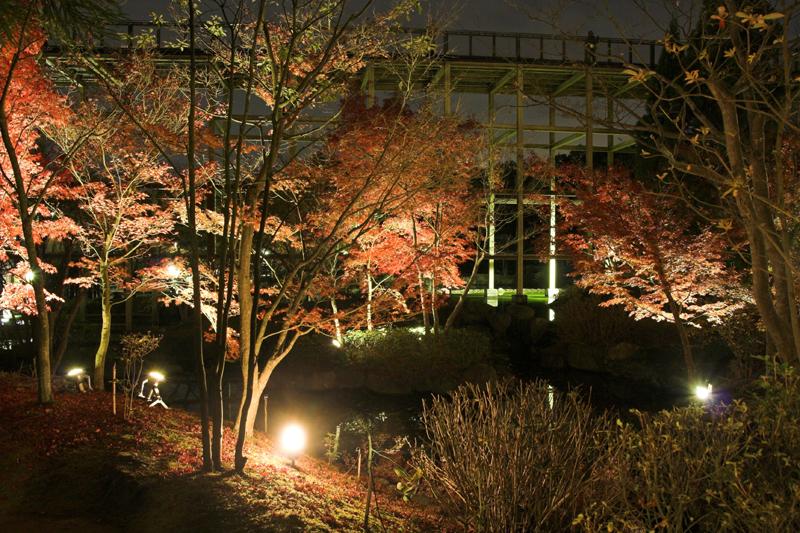 けいはんな記念公園_紅葉ライトアップ13_s.jpg