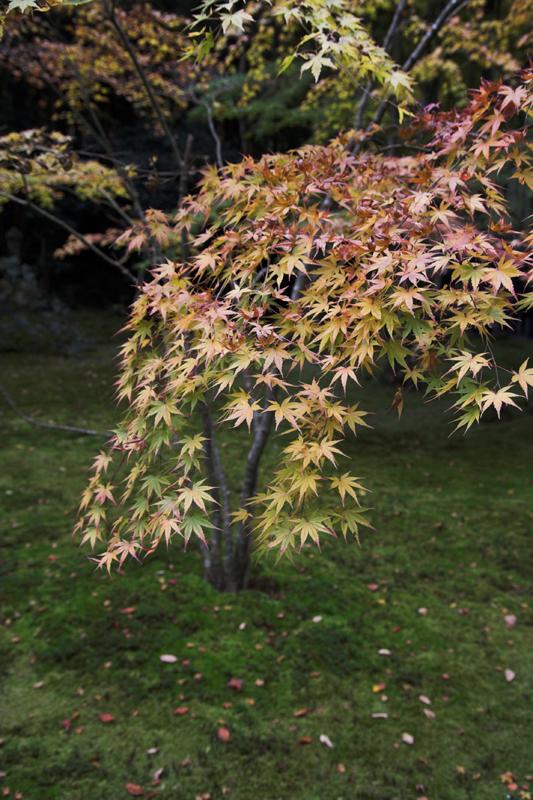 京都大原三千院5_s.jpg