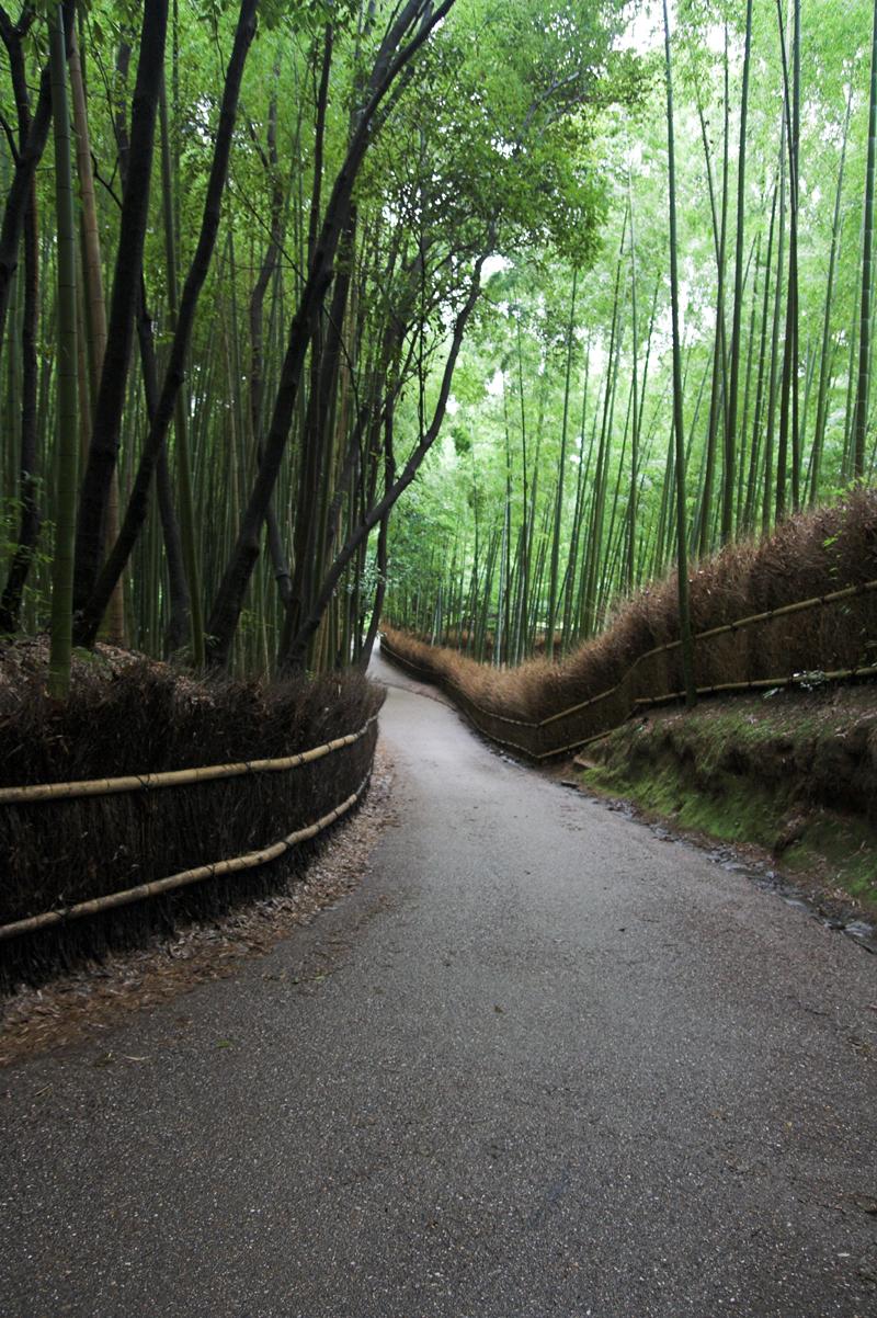 竹林など・・嵯峨嵐山で2_s.jpg