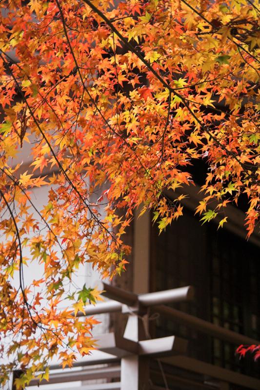 京都大原三千院13_s.jpg