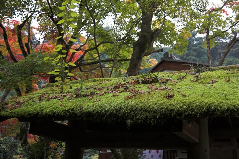 京都大原寂光院4_s.jpg