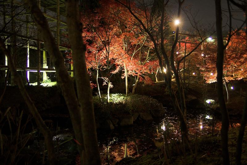 けいはんな記念公園_紅葉ライトアップ11_s.jpg