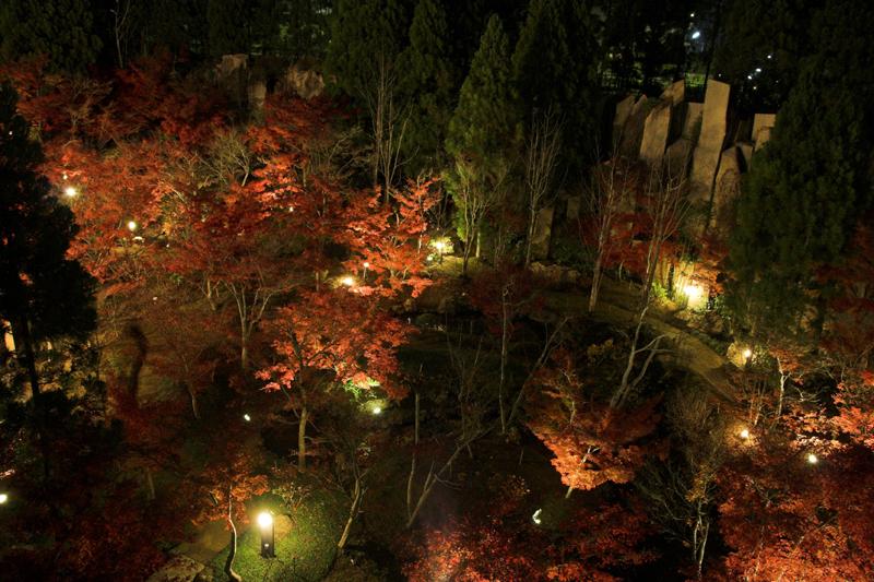 けいはんな記念公園_紅葉ライトアップ6_s.jpg