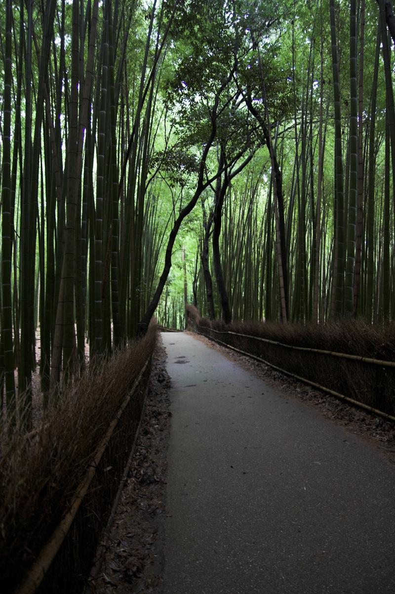 竹林など・・嵯峨嵐山で5_s.jpg