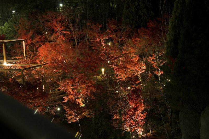 けいはんな記念公園_紅葉ライトアップ3_s.jpg