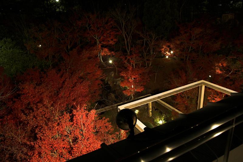 けいはんな記念公園_紅葉ライトアップ4_s.jpg