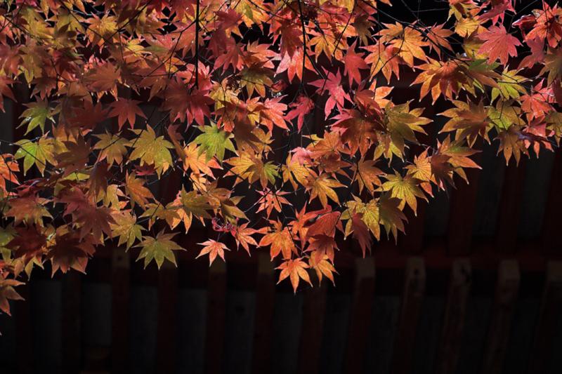 浄瑠璃寺8_s.jpg