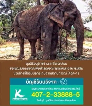 餓死寸前の象2