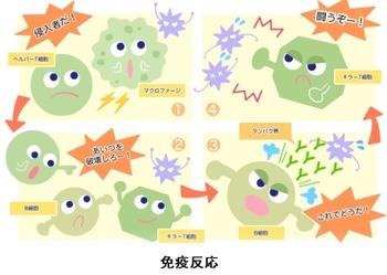 免疫反応を回避するウイルス2