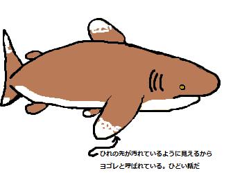 013 へらつの鮫
