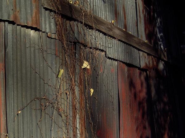 2006-12-27-018.jpg