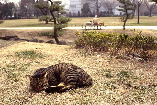 猫、2002-03-02-004.jpg